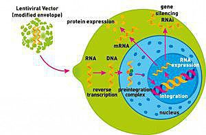 Lentigen Lentiviral Vector Technology